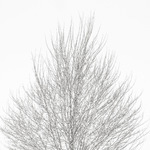 Tree and Snow 2014