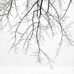 Hanging Branches with Snow, 2005